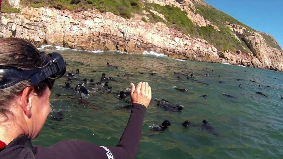 Swim with Seals