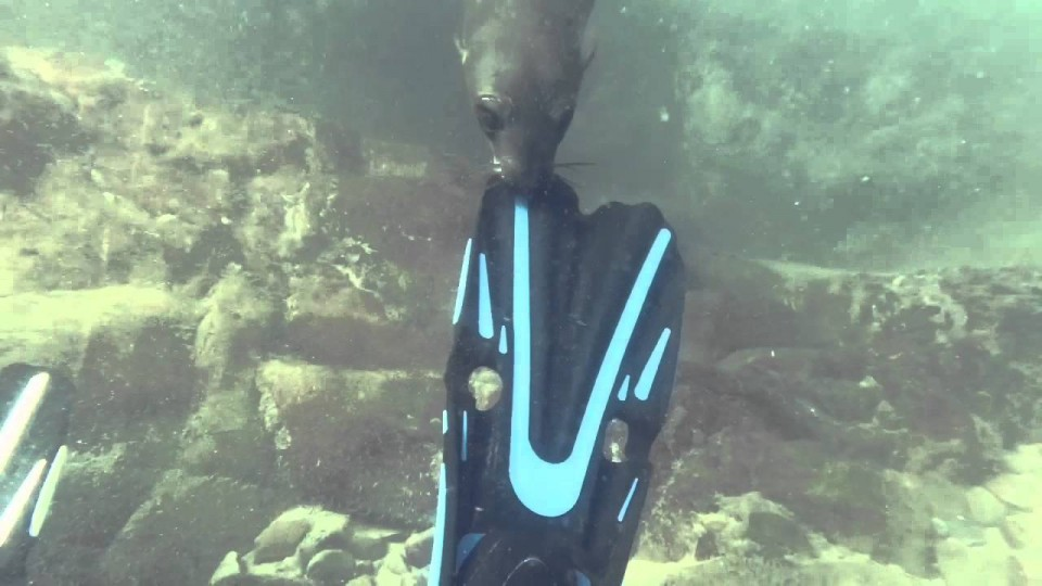 Seal dive Plettenberg Bay September 2015