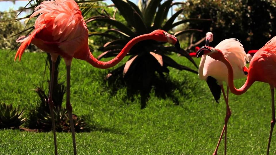Birds of Eden celebrates 10th birthday