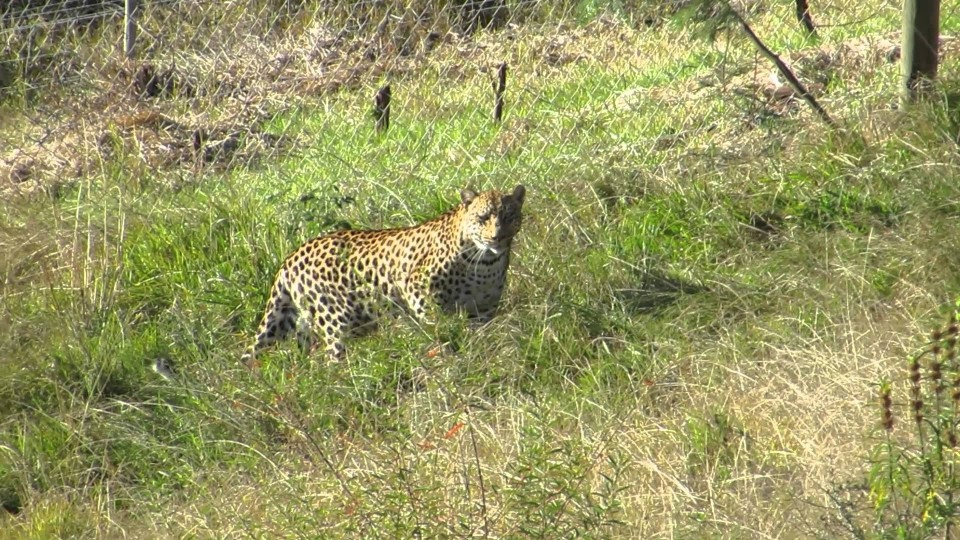 Spirit Update – Jukani Wildlife Sanctuary
