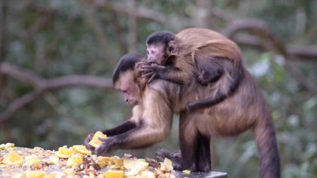Monkeyland in Plett