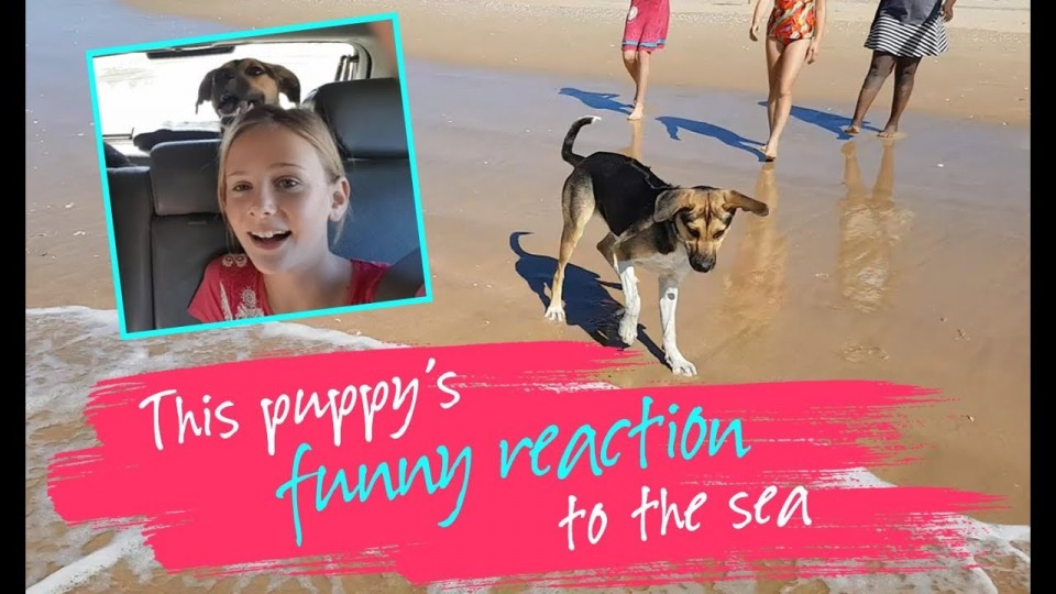 This puppy's funny reaction to the sea