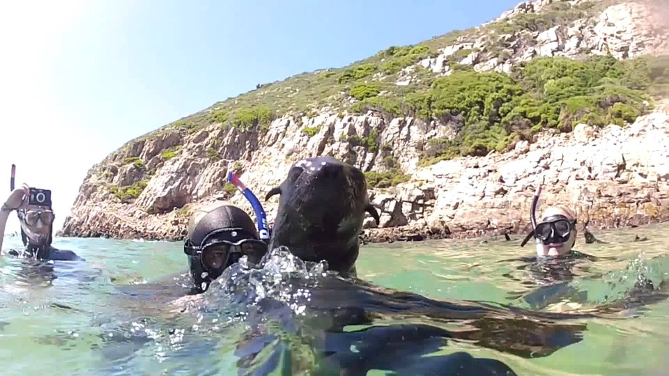 Diving with Seals in Plettenberg Bay