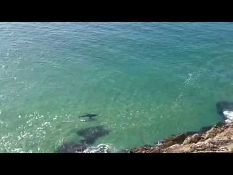 The best ever view of the Robberg Express Great White shark
