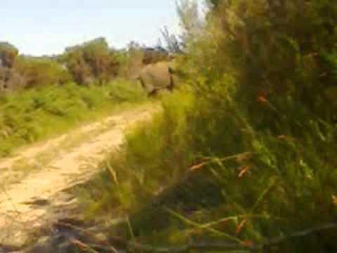 Oupoot the Knysna elephant caught on camera