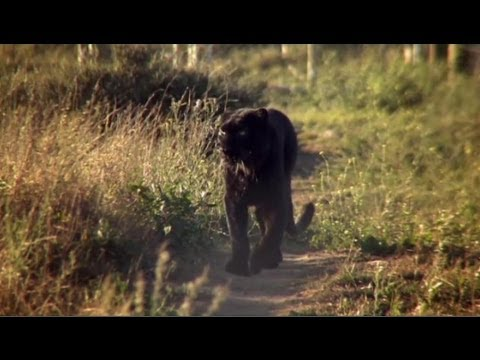 "How leopard Diabolo became Spirit – Anna Breytenbach, ""animal communicator"""